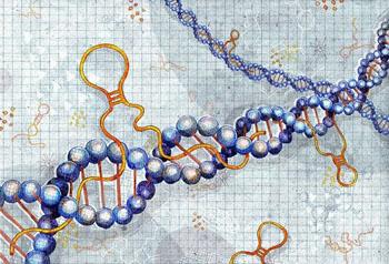 Image: An illustration of long non-coding RNAs (Photo courtesy of Julia Yellow).