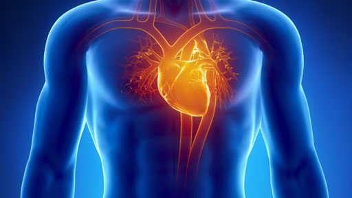 """Image: Research indicates induced \""""pacemaker\"""" heart cells could take the place of man-made pacemakers (Photo courtesy of Shutterstock)."""