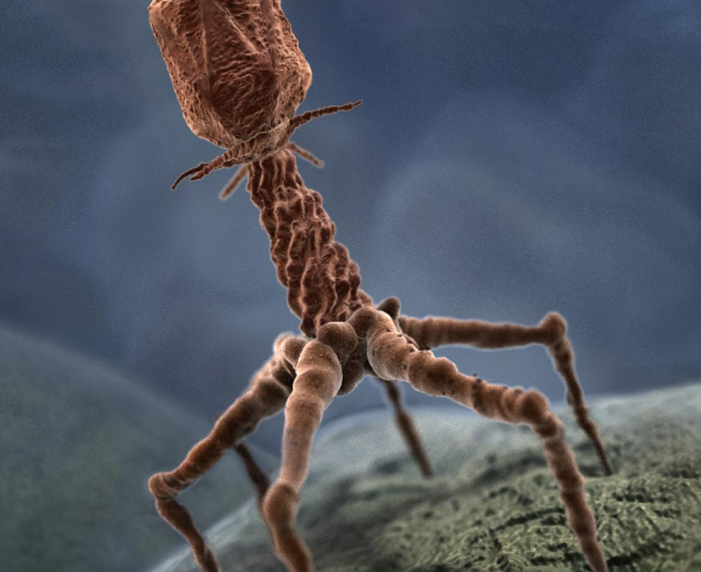 Image: Researchers have discovered new modes of bacteriophage spread (Photo courtesy of Getty Images).