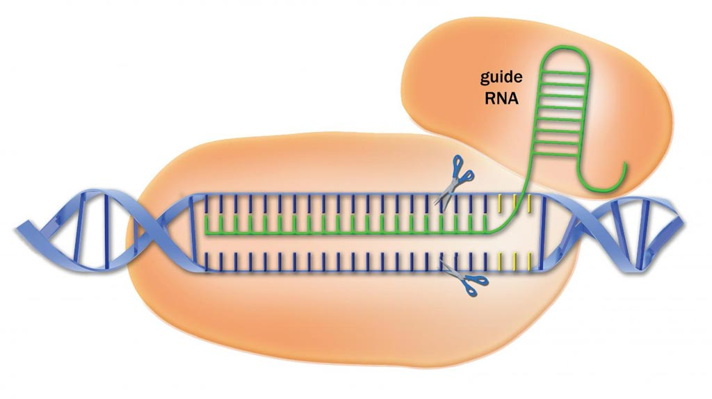 Image: CRISPR/Cas9 is a reprogrammable DNA cutting machine that is being used to edit genomes in many organisms for research purposes. A new resource provides a library of guide sequences that significantly increases CRISPR\'s specificity, while limiting off-target effects (Photo courtesy of Advanced Analytical Technologies).