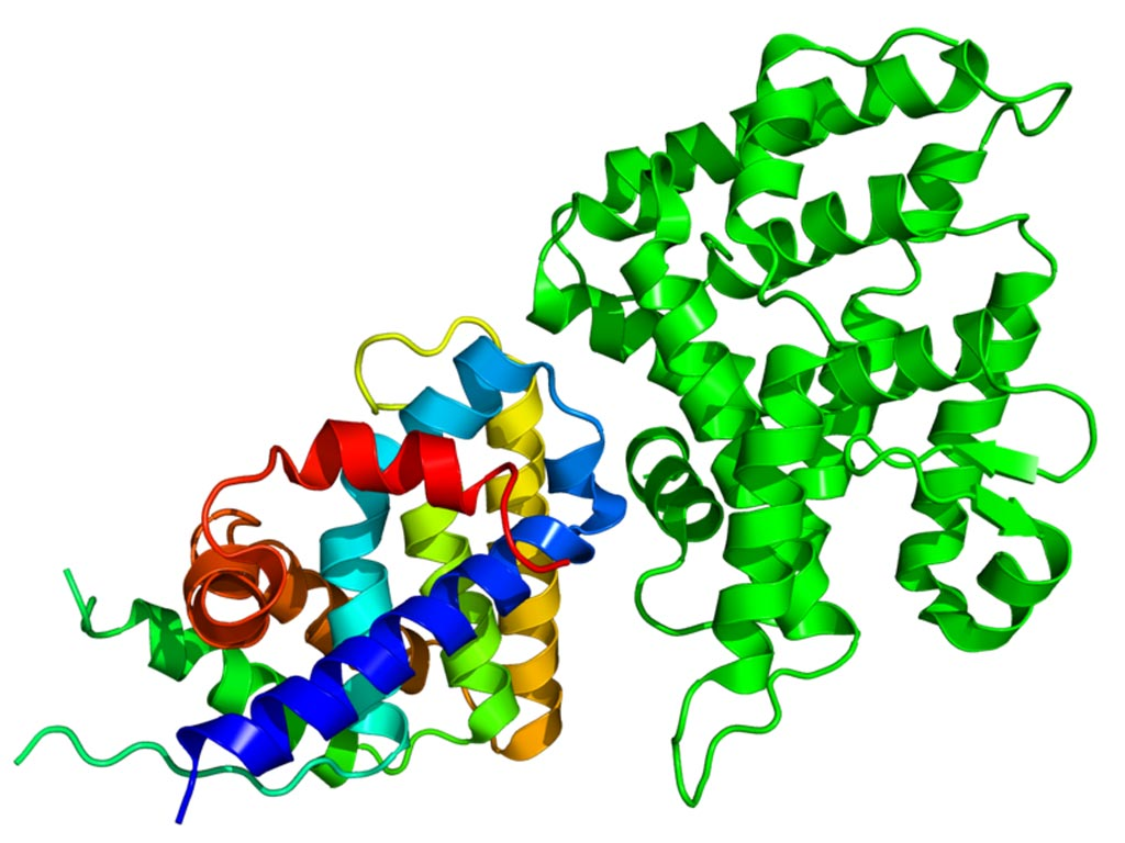 Image: The Crystallographic structure of NR0B1 (rainbow colored) complexed with the nuclear receptor protein LRH-1 (Liver receptor homolog-1) (Photo courtesy of Wikimedia Commons).