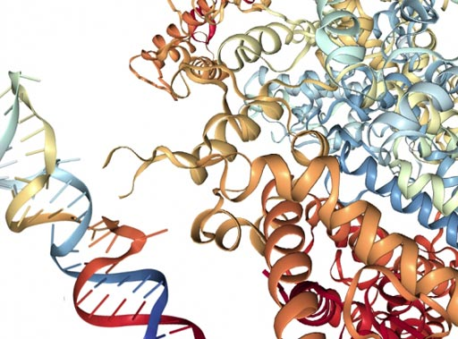 Image: A Cas13a molecule pictured with an RNA molecule (Photo courtesy of Lauren Solomon, Broad Communications).