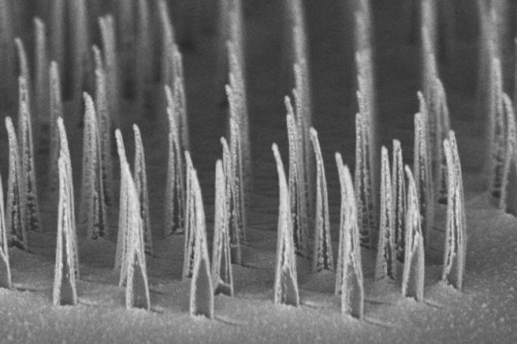 Image: A micrograph showing an array of nanospears prior to release for delivery of genetic information to cells (Photo courtesy of UCLA).