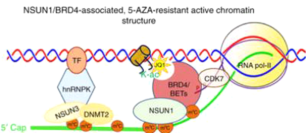 Image: A diagram of a 5-AZA resistant chromatin structure (Photo courtesy of Dr. Jason Cheng).
