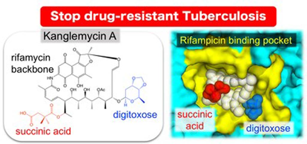 Image: The natural antibiotic kanglemycin A binds bacterial RNA polymerase at the rifampicin binding-pocket, but maintains potency against rifampicin-resistant mutants due to two unique chemical groups (digitoxose and succinic acid) that increase its affinity to rifampicin-resistant RNA polymerase by binding just outside the rifampicin-binding pocket (Photo courtesy of the Murakami Laboratory, Pennsylvania State University).
