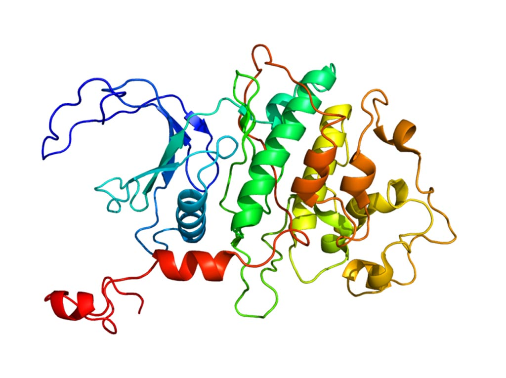 Image: The structure of CDK9 (cyclin-dependent kinase 9) protein (Photo courtesy of Wikimedia Commons).