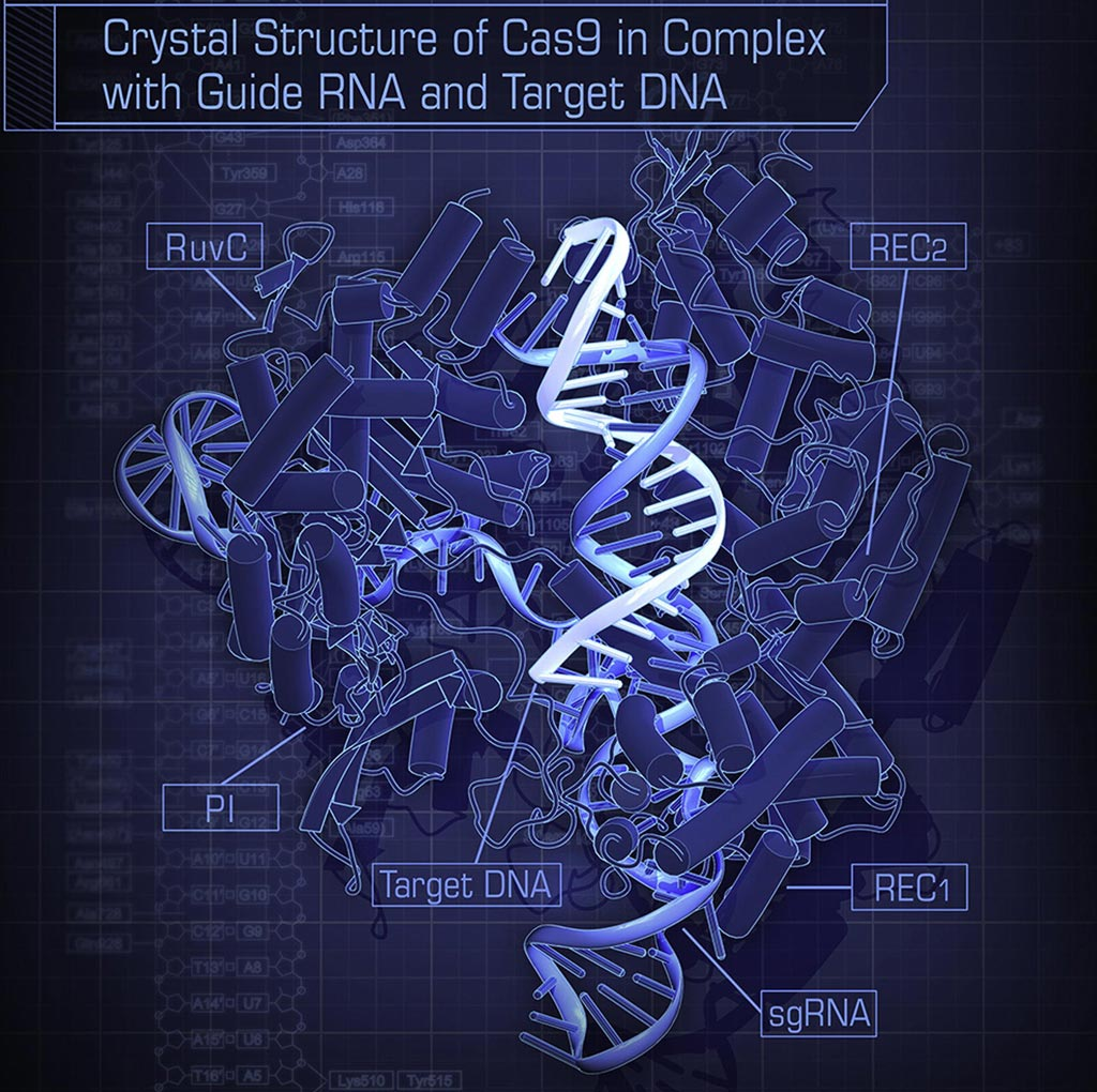 Image: The crystal structure of S. pyogenes Cas9 in complex with sgRNA and its target DNA at 2.5-Angstrom resolution (Photo courtesy of Wikimedia Commons).