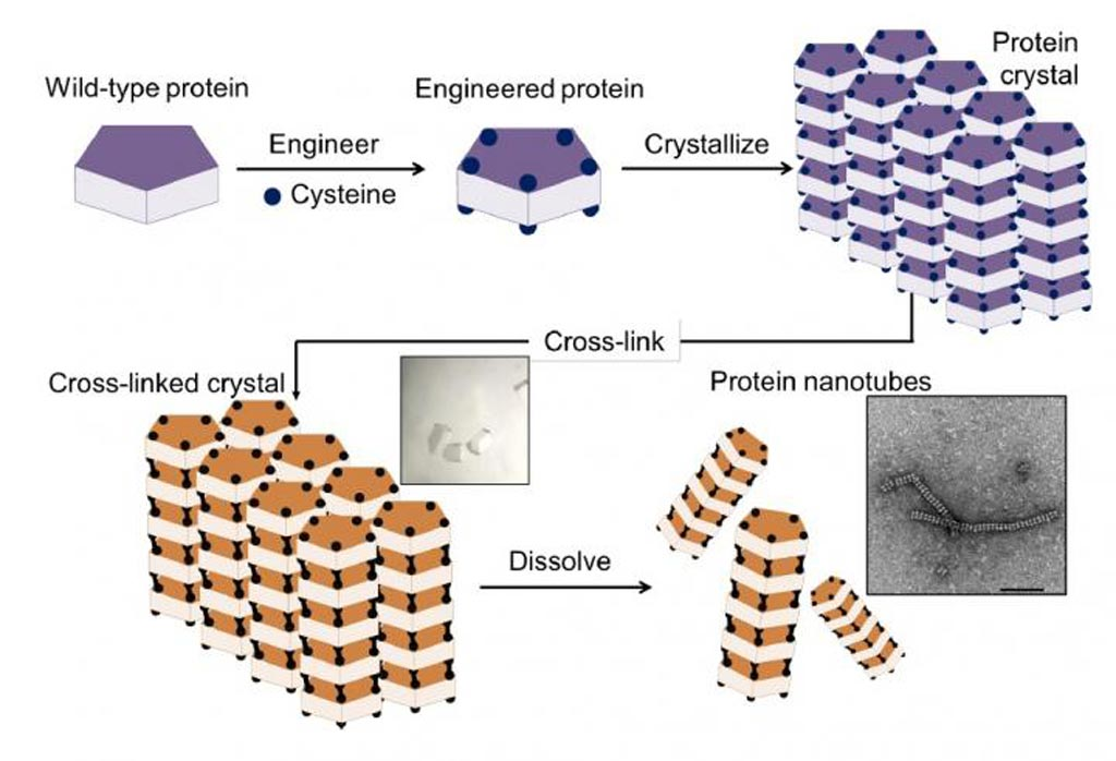 Image: The method for assembly of protein nanotubes involved a four-step process: 1) introduction of cysteine residues into the wild-type protein; 2) crystallization of the engineered protein into a lattice structure; 3) formation of a cross-linked crystal; and 4) dissolution of the scaffold to release the protein nanotubes (Photo courtesy of Chemical Science).