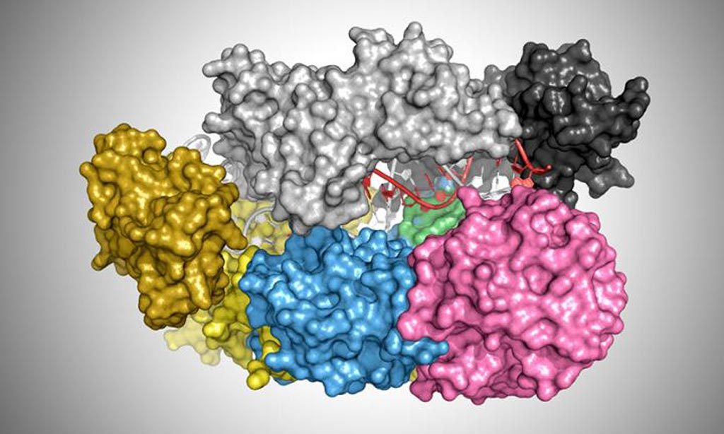 Image: Illustration showing the protein Cas12a (Cpf1) bound to a DNA helix (red and white) (Photo courtesy of T. Yamano and H. Nishimasu, who discovered and published the coordinates of each atom in the protein-DNA complex. James Rybarski used those coordinates and software called PyMol to generate the illustration).