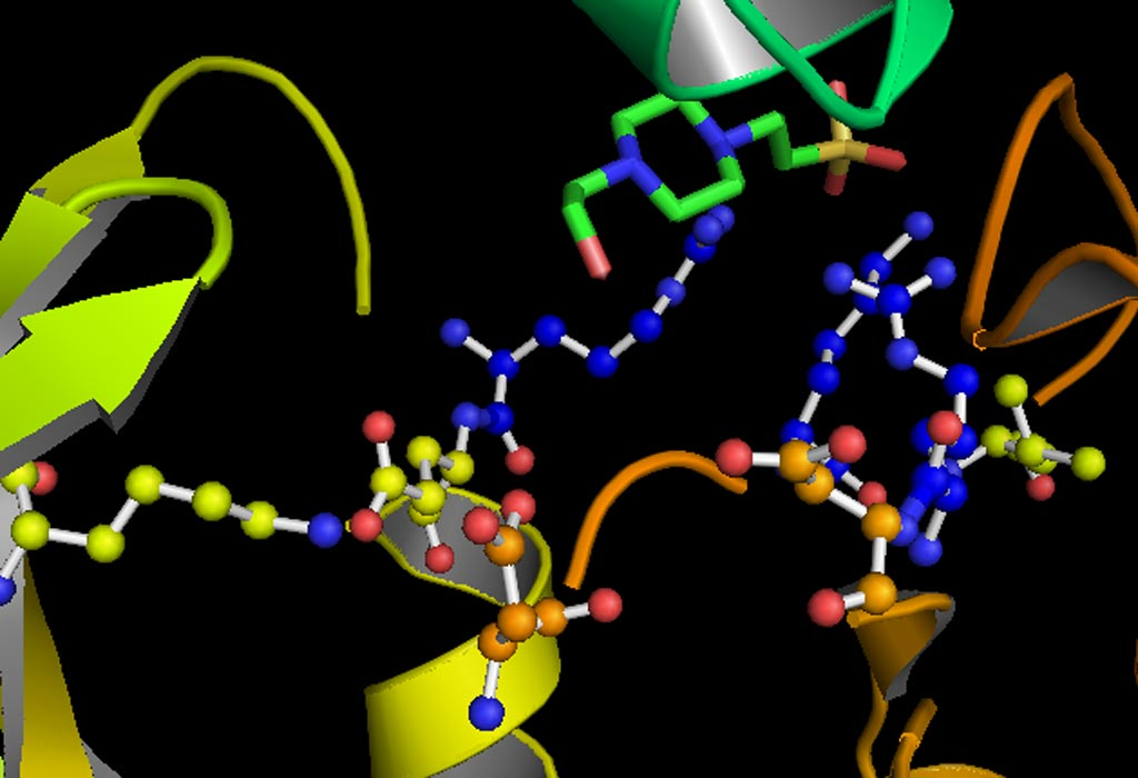 Image: A model of the active site of the kinase GSK-3 (glycogen synthase kinase 3) (Photo courtesy of Wikimedia Commons).