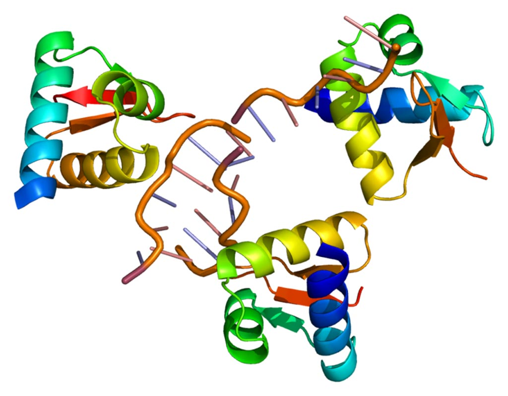 Image: The structure of the ADAR protein (Photo courtesy of Wikimedia Commons).