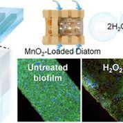 Imagen: las diatomeas impulsadas por H2O2 pueden alterar las colonias de biopelículas (Fotografía cortesía de la ACS).