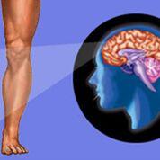 Imagen: Un estudio nuevo afirma que la redirección de los nervios cortados durante la amputación de una extremidad puede reducir el dolor fantasma (Fotografía cortesía de 123rf).