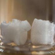 Imagen: Un estudio nuevo afirma que los nanocristales derivados de la celulosa de la planta pueden formar un aerogel fuerte pero liviano (Fotografía cortesía de Clare Kiernan/ UBC).