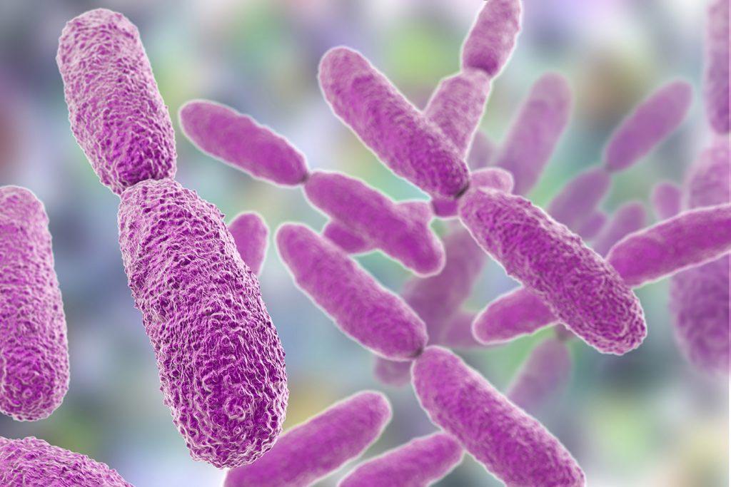 Imagen: La bacteria, Klebsiella pneumoniae se extiende por los hospitales en Europa (Fotografía cortesía de Shutterstock).