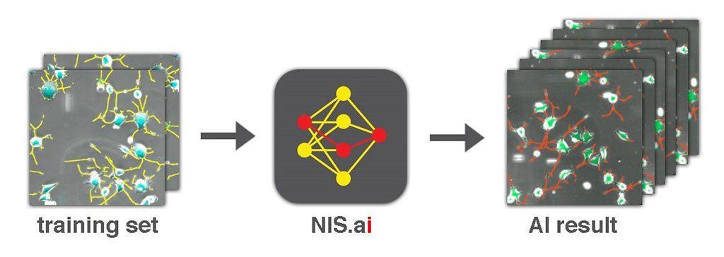 Imagen: Un conjunto de aplicaciones de microscopía ayuda a la imagenología predictiva, la segmentación y el procesamiento (Fotografía cortesía de Nikon Instruments)