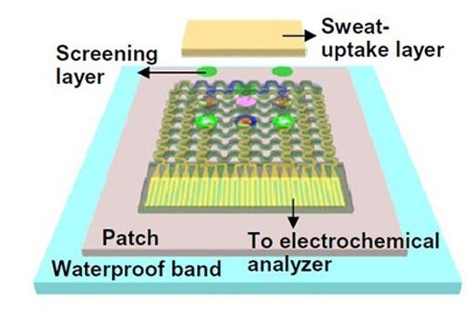 Imagen: Un diagrama del parche portátil para la monitorización del sudor. Una capa porosa de absorción de sudor es colocada sobre una capa de Nafion y de sensores (Fotografía cortesía del Instituto de Ciencias Básicas).
