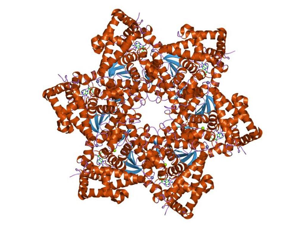 Imagen: Un modelo molecular del virus del papiloma humano (VPH) (Fotografía cortesía de Wikimedia Commons).