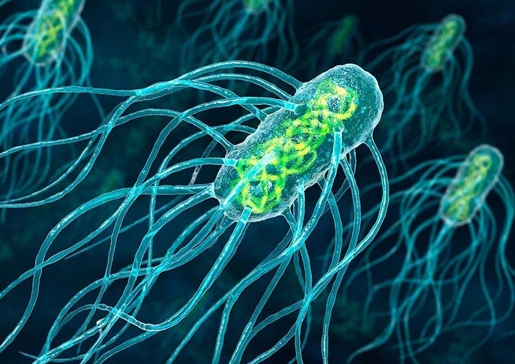 Imagen: Salmonella typhi, la bacteria responsable de la fiebre tifoidea (Fotografía cortesía de Animated Healthcare).