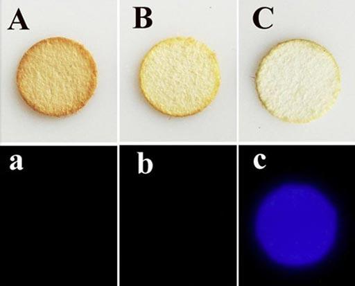 La determinación de cual mancha en estos papeles de filtro (fila superior) es de sangre (C) en lugar de café (A) o té (B) es más fácil con la nueva prueba más selectiva de quimioluminiscencia con artemisinina-luminol para la detección forense de manchas de sangre) (Fotografía cortesía de la ACS).