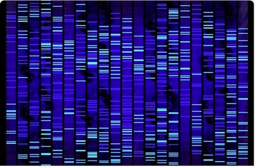 Imagen: Los científicos descubrieron que, mediante el análisis de 19 nuevos factores genéticos, además de los 25 genes de riesgo ya conocidos, se podría identificar al 1% de los hombres con mayor riesgo de cáncer testicular (Fotografía cortesía de Shutterstock).