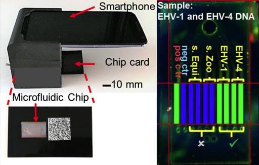 Imagen: El sistema usa un teléfono inteligente comercial para adquirir e interpretar imágenes en tiempo real de una reacción de amplificación enzimática que tiene lugar en un chip microfluídico de silicio que genera fluorescencia verde y muestra una lectura visual de la prueba. El sistema está compuesto por un teléfono inteligente no modificado y una cuna portátil, impresa en 3 dimensiones, que admite los componentes ópticos y eléctricos, y se conecta con la cámara trasera del teléfono inteligente (Fotografía cortesía del Laboratorio de Micro y Nanotecnología de la Universidad de Illinois en Urbana-Champaign).