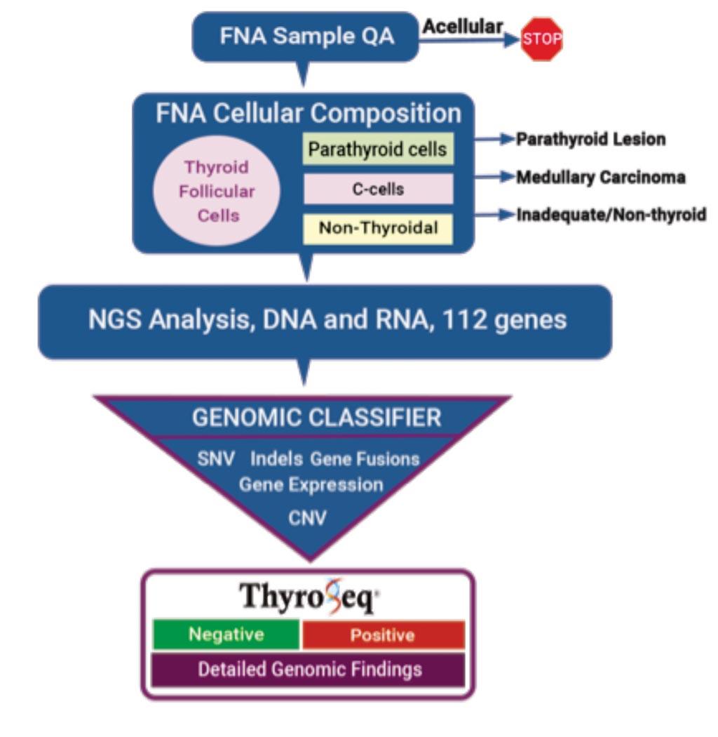 Imagen: Un diagrama de flujo de trabajo del ensayo ThyroSeq Genomic Classifier para determinar el estado preoperatorio del cáncer de tiroides (Fotografía cortesía de ThyroSeq).