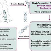 Imagen: Un diagrama de la cohorte KidCMP de niños con cardiomiopatías graves de los últimos 21 años que fueron analizados genéticamente (Fotografía cortesía de Catalina Vasilescu/Universidad de Helsinki).