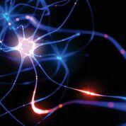 Imagen: Se ha identificado la recombinación de genes en las neuronas que producen miles de nuevas variantes de genes dentro de los cerebros de los pacientes con enfermedad de Alzheimer (Fotografía cortesía del Instituto de Descubrimiento Médico Sanford Burnham Prebys).