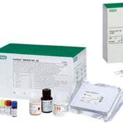 Imagen: PLATEILA DENGUE NS1 AG: Detección cualitativa o semicuantitativa del antígeno NS1 del virus del dengue en suero o plasma humano mediante inmunoensayo enzimático (Fotografía cortesía de Bio-Rad).