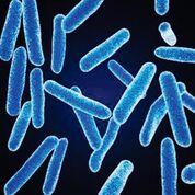 Imagen: Una micrografía electrónica de barrido a color (SEM) de Faecalibacterium prausnitzii, una de las bacterias anaeróbicas más abundantes en la microbiota intestinal humana; su abundancia relativa es un biomarcador de la salud intestinal en los adultos (Fotografía cortesía de BioFoundations).