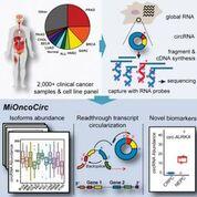 Imagen: Una interpretación gráfica de los ARN circulares asociados con el cáncer catalogados para diferentes tipos de tumores (Fotografía cortesía de la Universidad de Michigan).