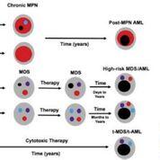 Imagen: Un modelo para establecer el impacto de la frecuencia de alelo variante de TP53 en la progresión de la enfermedad en los casos de neoplasias mieloides (Fotografía cortesía del Centro de Cáncer e Instituto de Investigación Lee Moffitt).