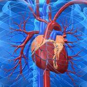 Imagen: Un análisis de sangre nuevo promete un diagnóstico casi instantáneo de un ataque cardíaco utilizando un biomarcador de proteínas descubierto recientemente (Fotografía cortesía de iStock).