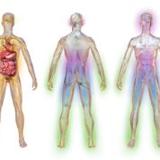 Imagen: Una ilustración que muestra las áreas afectadas por la neuropatía diabética periférica (NDP) (Fotografía cortesía de Wikimedia Commons).