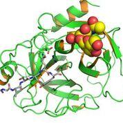 Imagen: El biomarcador en suero antígeno prostático específico del cáncer de próstata (PSA) (Fotografía cortesía de Wikimedia Commons).