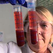 Imagen: Un investigador preparando muestras de sangre para las pruebas Actiphage (Fotografía cortesía de la facultad de biociencias de la Universidad de Nottingham).