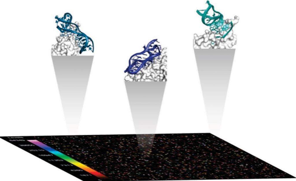 Imagen: Un diagrama del Ensayo SomaScan que se basa en las propiedades distintivas de los reactivos Aptámero Modificado de Velocidad Lenta (SOMAmero), que son reactivos patentados de unión a proteínas (Fotografía cortesía de Somalogic).