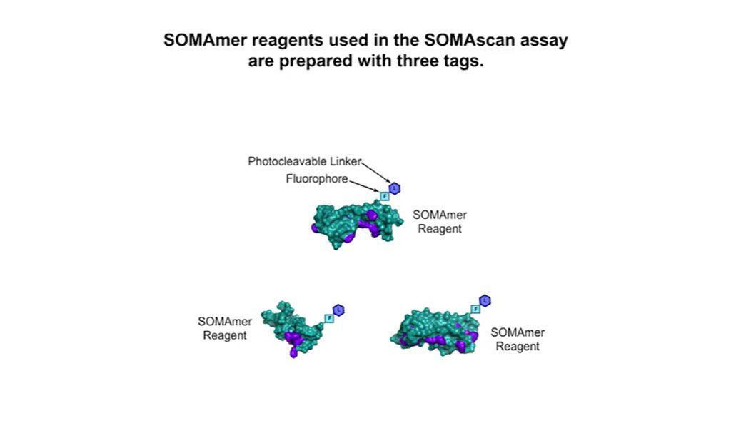 Imagen: Método para medir grandes cantidades de componentes proteicos en un solo análisis de sangre (Fotografía cortesía de SomaLogic)