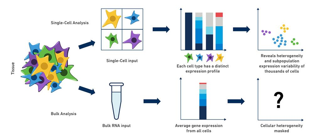 Imagen: La secuencia del ARN de una sola célula revela una heterogeneidad celular que está enmascarada por los métodos de secuencia de ARN en bloque (Fotografía cortesía de 10x Genomics)