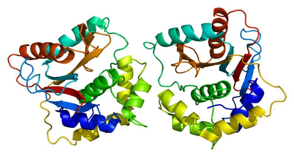 Imagen: Estructura de la proteína UCH-L1 (Fotografía cortesía de Wikimedia Commons)