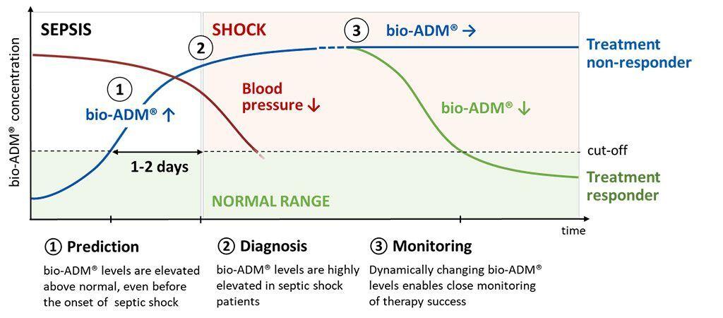 Imagen: El biomarcador de la función endotelial, adrenomedulina, medido mediante bio-ADM mejora la estratificación del riesgo de los pacientes con sepsis (Fotografía cortesía de sphingotec).