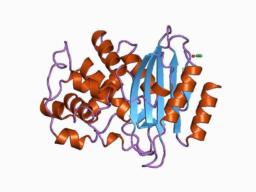 Imagen: Representación en dibujos animados de la estructura molecular de la proteína blaTEM (beta-lactamasa) (Fotografía cortesía de Wikimedia Commons)