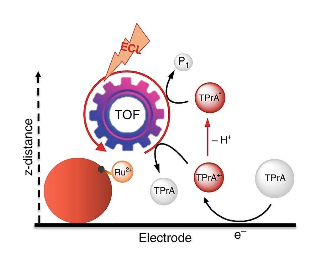 Imagen: Representación esquemática del mecanismo de electroquimioluminiscencia remota (ECL) (Fotografía cortesía de la Universidad de Bolonia).