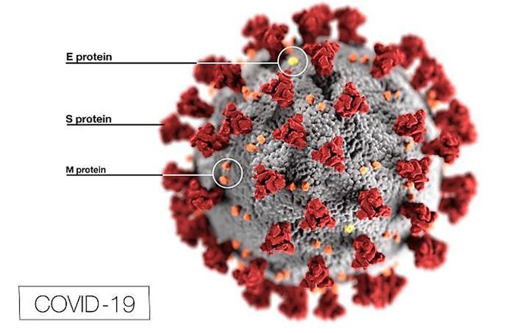 Imagen: Esta ilustración revela la morfología ultraestructural exhibida por los coronavirus. Observe las proteínas spike que adornan la superficie externa del virus, que imparten la apariencia de una corona que rodea al virión, a la observación con el microscopio electrónico (Fotografía cortesía de los Centros para el Control y la Prevención de Enfermedades).