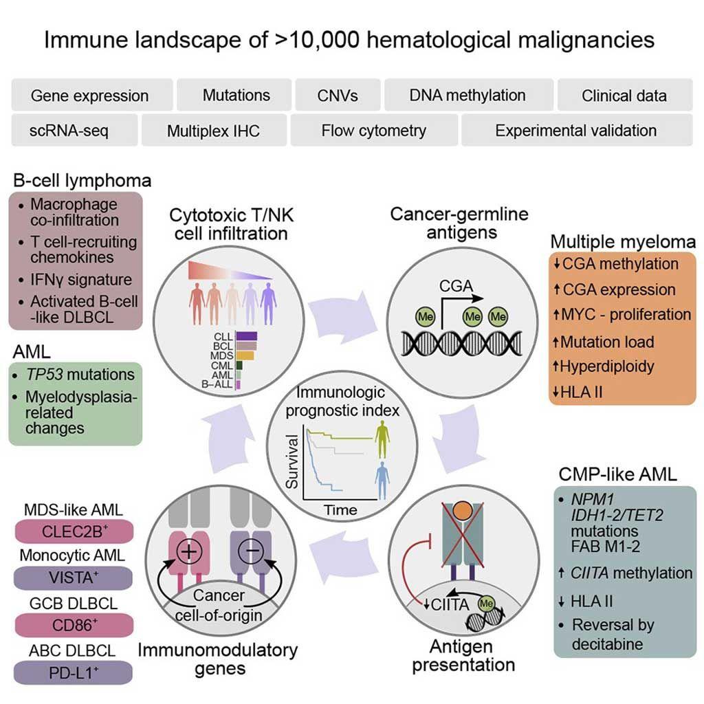 Imagen: El paisaje inmunogenómico de las neoplasias hematológicas (Fotografía cortesía del Hospital Universitario de Helsinki).