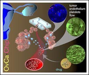 Imagen: Diagrama esquemático del microsistema OvCa-Chip que recrea la extravasación de plaquetas mediada por el endotelio vascular en el cáncer de ovario (Fotografía cortesía de la Facultad de Ingeniería de Texas A&M).