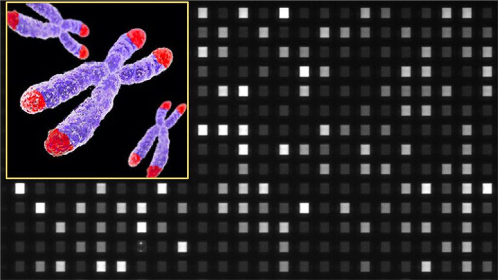 Imagen: Imagen ampliada capturada por el dispositivo utilizado para realizar el ensayo STAR (análisis rápido de longitud absoluta de un solo telómero). Las diferentes intensidades de fluorescencia reflejan las variaciones en la longitud en las moléculas de los telómeros individuales (Fotografía cortesía de la Universidad Nacional de Singapur).