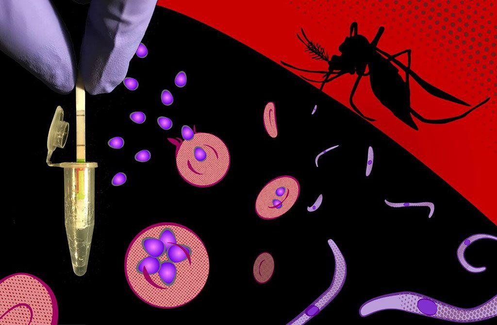 Imagen: Un ensayo de diagnóstico ultrasensible aplicable en el campo, detecta específicamente secuencias de ADN y ARN de todas las especies de Plasmodium en malaria sintomática y asintomática, y entrega sus resultados rápidamente en dispositivos reporteros simples (Fotografía cortesía de Peter Nguyen, Universidad de Harvard)