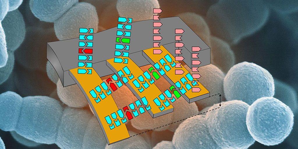 Imagen: Ilustración esquemática de la matriz en voladizo para detectar resistencia a los antibióticos. (Imagen: Departamento de Física y Laboratorio de Nanoimagenología, SNI, Universidad de Basilea).